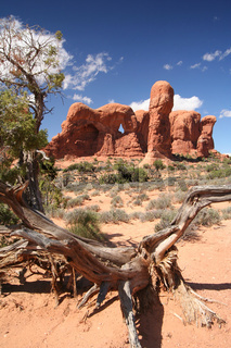 Windows Section im Arches Nationalpark
