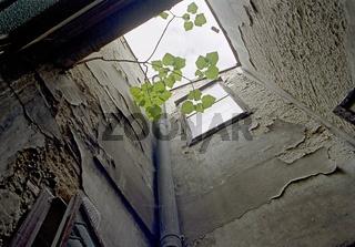 Lichthof mit desolatem Verputz und kleinem Baum