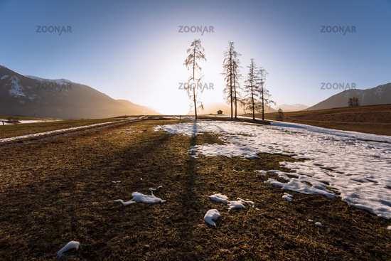 Alpine mountain landscape in spring with melting snow and large trees with backlight, Mieminger Plateau, Tirol, Austria