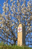 Pilgrim way with a blossom cherry tree