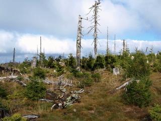 natürliche Waldverjüngung nach Waldsterben