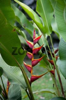 Blüten Costa Ricas