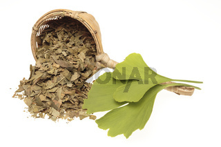 getrocknete Ginkgoblätter und frischer Blatt. Ginkgo oder Ginko (Ginkgo biloba) Blätter in der getrockneten Handelsform. In der Heilkunde wird dem Ginkgo eine durchblutungsfördernde Wirkung zugesprochen. Pflanzenteile oder Extrakte werden daher zum Zwecke