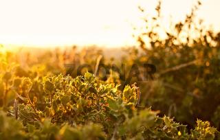 A Field Of Carissa Holly