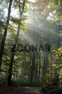Autumnal colored - Licht im Wald