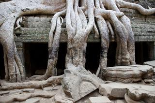 Tempel Ta Prohm in Kambodscha