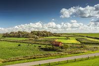 Typische Landschaft mit Weideflächen auf der Halbinsel Nordstrand, Nordfriesland, Deutschland