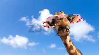giraffe in sunglasses over blue sky and clouds