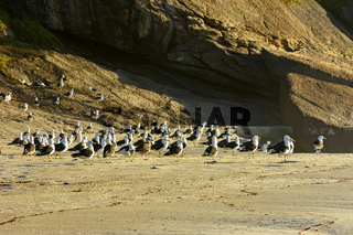 Seagulls resting on the rocks and sand at Devil beach