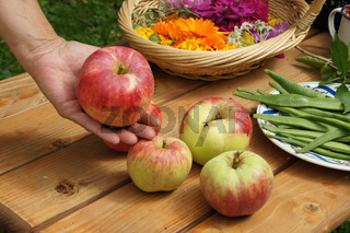 Malus domestica Jakob Fischer, Apfel