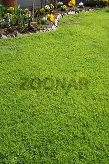 Rasen, Lawn, Grass
