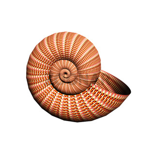 shell-nautilus-pompilius-decorated-with-ornament-isolated-on-white-can-be-used-as-a- logotype