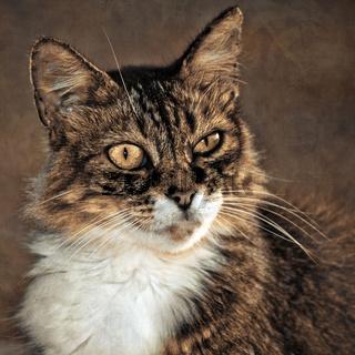 Katzenportrait mit Textur