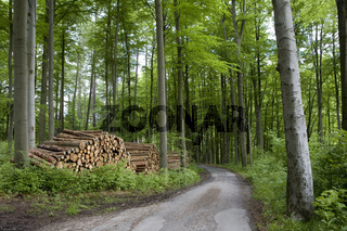 holzwirtschaftlich genutzter Mischwald