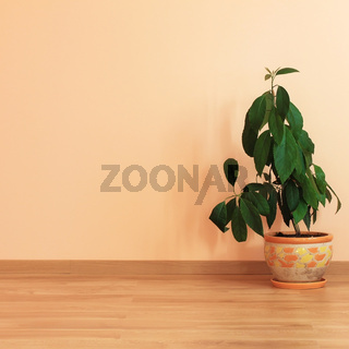 Plant in room