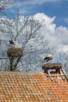 Zywkowo,das Storchendorf in Masuren,Polen