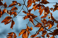 Herbstblätter am Lipnitzsee
