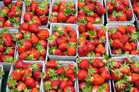 Frische Erdbeeren zum Verkauf
