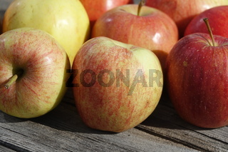 Malus domestica Tenroy Syn. Royal Gala, Apfel, apple