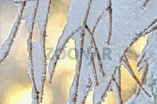 Schnee gefroren am Nadelbaum