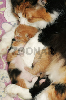 Caring mother with kittens