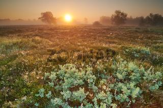 Neustaedter Moor
