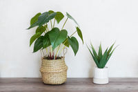 two potted house plants on wooden table