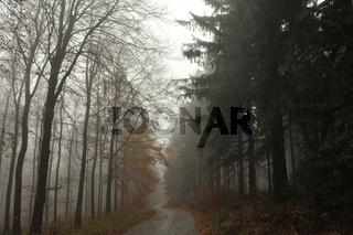 Herbst Tour zur Annaturm im Deister.