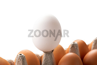 One white egg rises above brown eggs. concept of Concept of racism, intolerance, denial of society