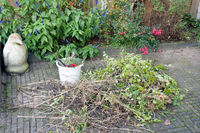 Bucket with gardening tools and stack of pruning waste