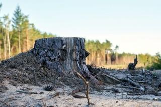 gerodeter Wald an der Baustelle der Autobahn A14