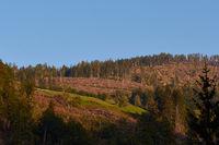 Holzeinschlag nach Borkenkaeferbefall