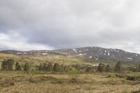 Hochmoor Omnsfjellet in   Langlidalen