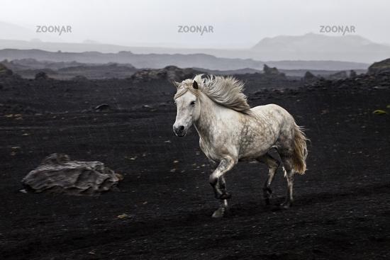 IS_Pferd_12.tif