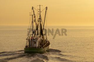 Fischkutter auf der Nordsee in der Abendsonne, Büsum, Schleswig-Holstein, Deutschland