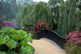 Rhodendrons in Sheffield Park Gardens
