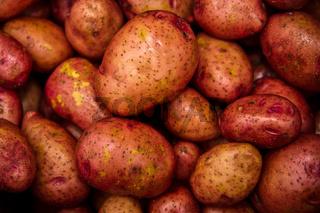 Rosara Kartoffeln