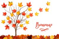 Tree With Colorful Leaf Decoration, Leaves Flying Away, Bienvenue Means Welcome