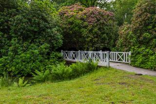 Schlosspark Lütetsburg mit Rhododendron und weißer Holzbrücke, Ostfriesland, Deutschland