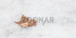 Kaunas Snow VIII