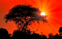 Sonnenuntergang im Murchison Falls Nationalpark Uganda | Sunset at Murchison Falls National Park Uganda
