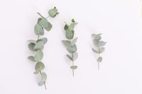 Three branches with green leaves lying on white background