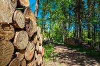 Holzstapel im Nebeldurchbruchstal zwischen Serrahn und Kuchelmiß