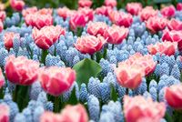 Beautiful colorful blooming spring flowers