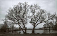 Der Baum am Weiher