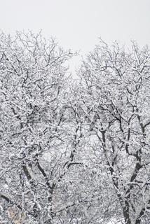 Schneefall 5