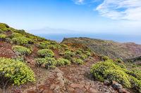 Landschaft auf La Gomera mit blühenden Wolfsmilchgewächsen und Blick auf Teneriffa