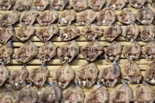 Dried Fish on a Market in Tagbilaran