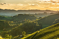Styrian Tuscany Vineyard in autumn near South Styria, Rabenland