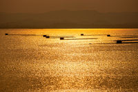 Fish farming on the water reflects golden light